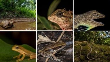 লাউয়াছড়ায় নতুন ১৮ প্রজাতির প্রাণীর সন্ধান , ১১ প্রজাতি দেশে নতুন