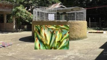 বায়োফ্লক : নতুন এক পদ্ধতিতে মাছ চাষেআগ্রহী হয়ে উঠছেনতরুণেরা