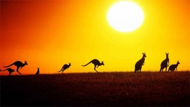 তীব্র তাপমাত্রায় পুড়ছে অস্ট্রেলিয়া