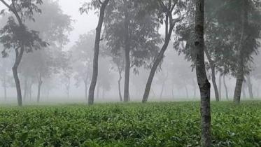 শ্রীমঙ্গলে তাপমাত্রা নেমেছে ১১.৪ ডিগ্রিতে