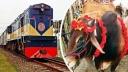 ঢাকা ও চট্টগ্রামে ট্রেনে করে আসবে কোরবানির পশু