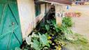 কুলাউড়ার গণগ্রন্থাগারটি জলাবদ্ধ ময়লার ভাগাড়