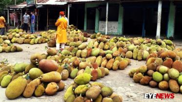 মৌলভীবাজারে কাঁঠালের ফলন ভালো হলেও দাম নিয়ে চাষীরা হতাশ